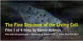 Harold Hillman living cell video